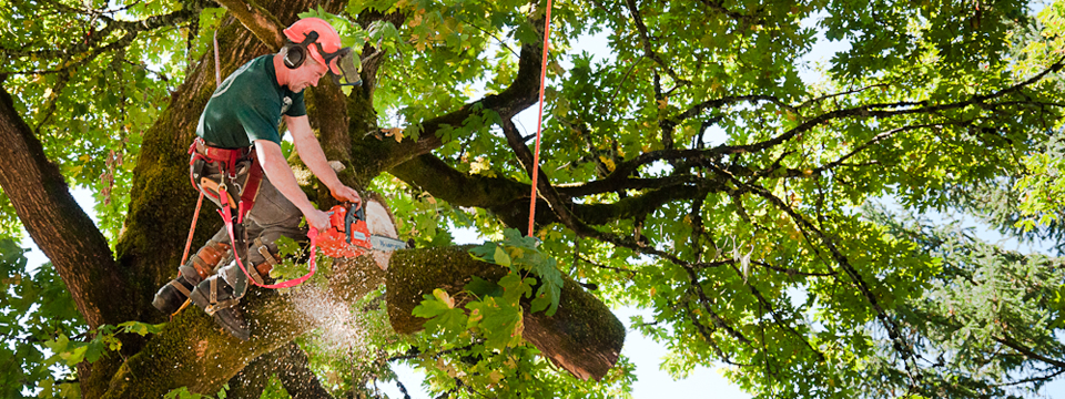Choosing a Tree Service Professional