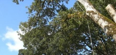 Tree Service Salem Oregon