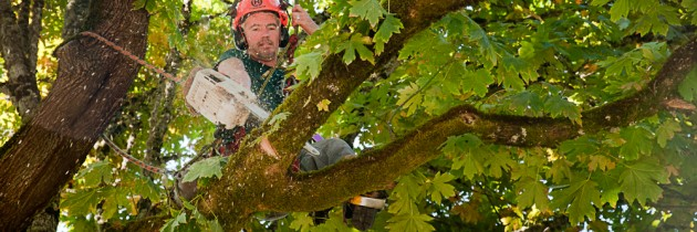 Tree Removal Salem Oregon
