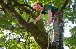 Tree Service Salem Oregon